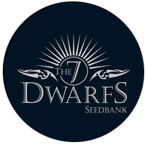 7 Dwarfs Seeds - Seed Bank