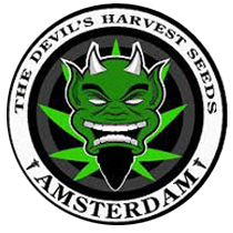 Devils Harvest Seeds - Seed Bank