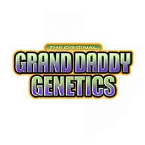 Grand Daddy Purple seeds - Seed Bank