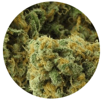 Green Crack - Seed Bank