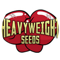 Heavyweight Seeds - Seed Bank