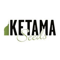 Ketama Seeds - Seed Bank