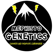 Mephisto Genetics Seeds - Seed Bank