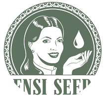 Sensi Seeds CBD - Seed Bank