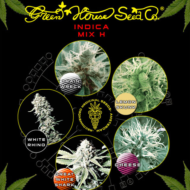 Buy Green House Seeds Indica Coloured Mix H  FEM
