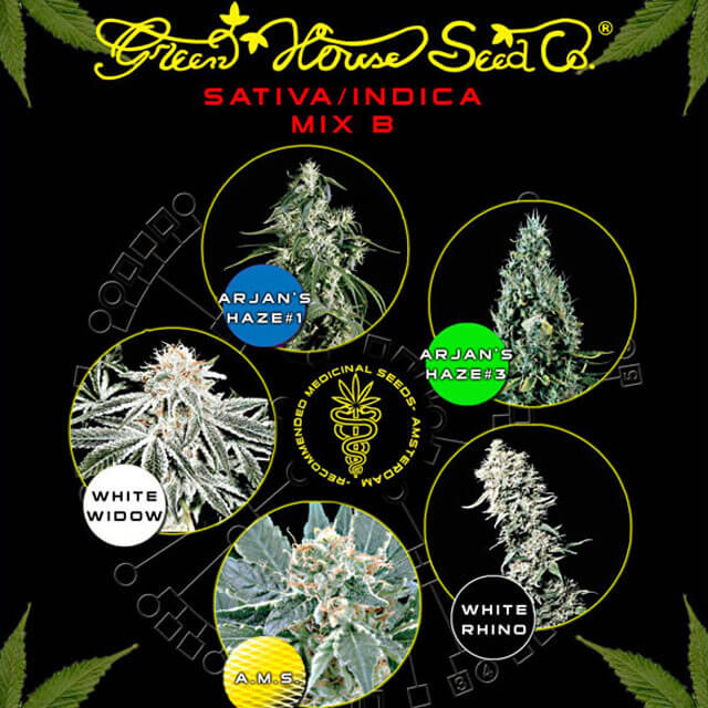 Buy Green House Seeds Sativa / Indica Mix B FEM