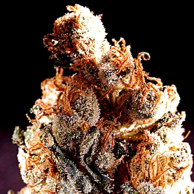 Buy Delta 9 Seeds Aiea REG