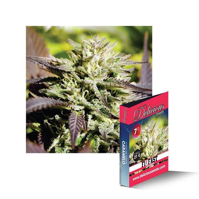 Buy Delicious Seeds Caramelo Fast FEM
