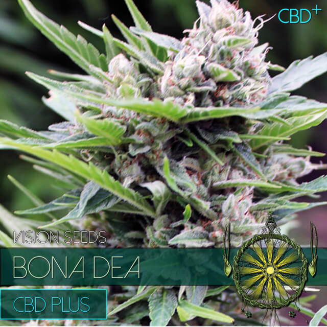 Buy Vision Seeds  Bona Dea FEM