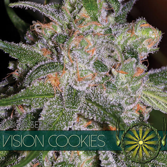 Buy Vision Seeds  Vision Cookies FEM