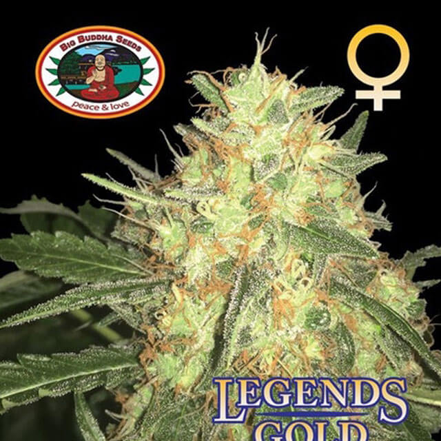 new strains from big buddha seeds now available