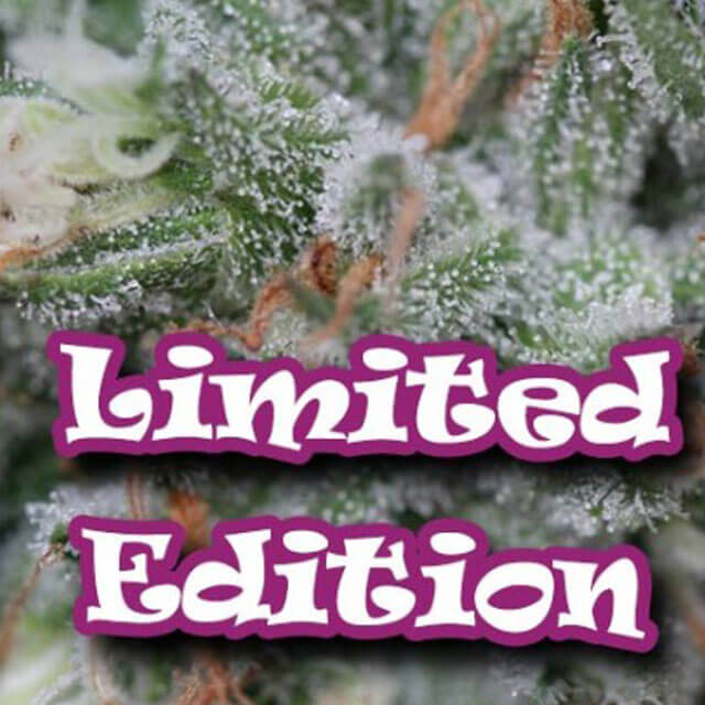 Buy Homegrown Fantaseeds  Original Tahoe S1 FEM
