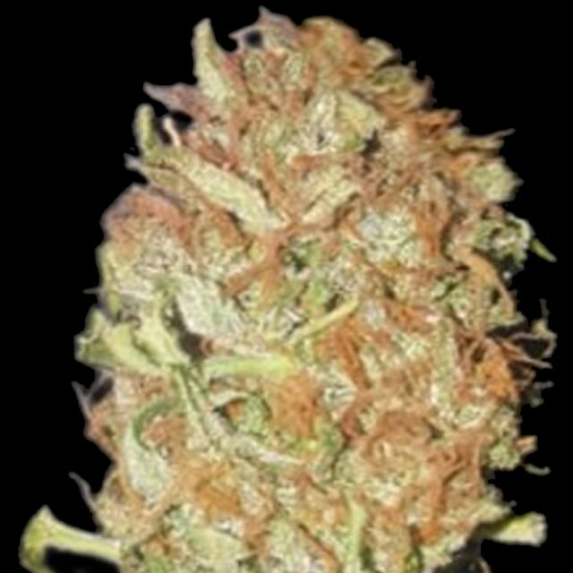 Buy Bulk Seed Bank Auto Psychedelic FEM