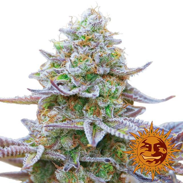 Buy Barneys Farm Seeds Gorilla Zkittlez FEM