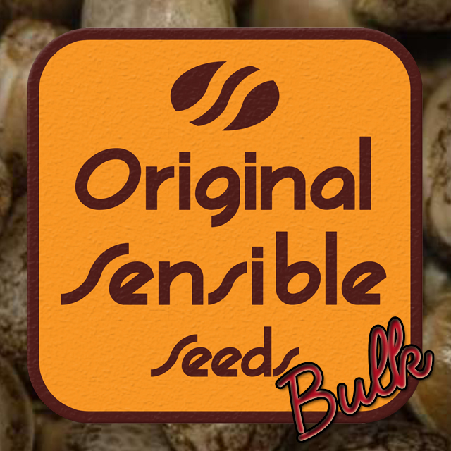 Buy Original Sensible Seeds Landrace Sativa FEM