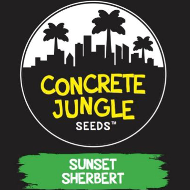 Buy Concrete Jungle Seeds Sunset Sherbert FEM