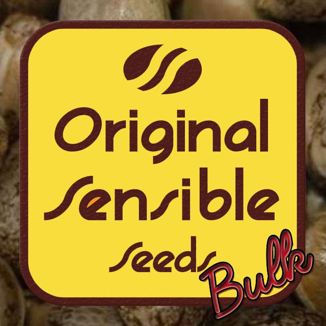 Buy Original Sensible Seeds OG Kush Auto FEM
