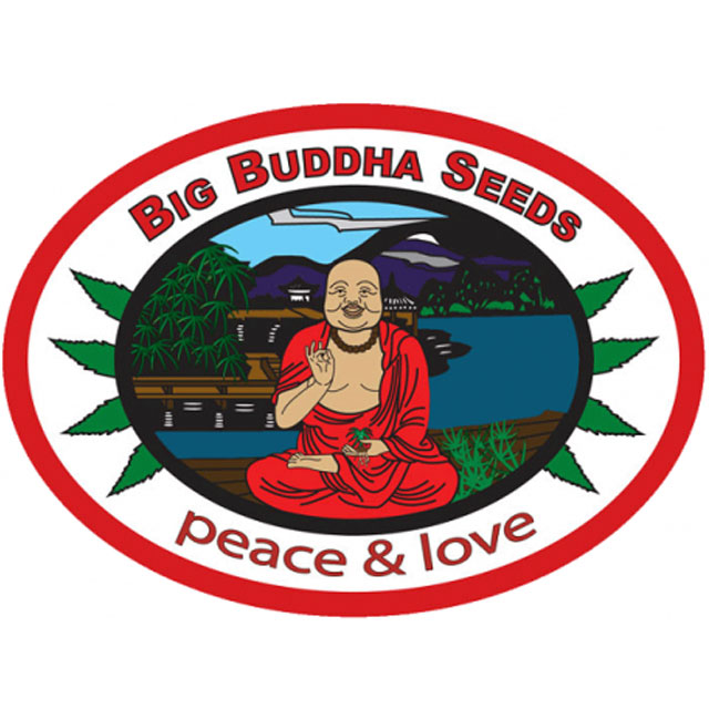 Buy The Big Buddha Seeds The Big Buddha Seeds Mix FEM