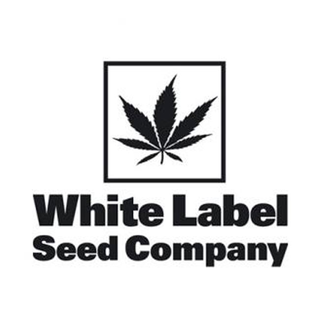 Buy Sensi White Label Seeds Feminized Mix FEM