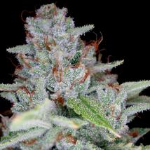 Best Seller - Skywalker Kush
