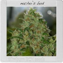 Best Seller - Nacho's Bud