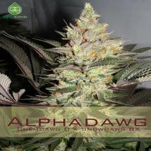 Best Seller - Alphadawg