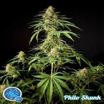 Philosopher Philo Skunk