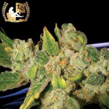 Best Seller - English OG