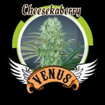 Cheesekaberry