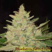 Blueberry Ghost OG