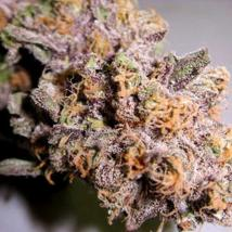 Original Granddaddy Purple