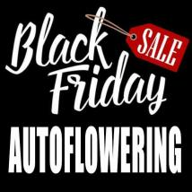 Black Deals Autoflowering Cannabis Seeds