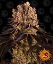 Best Seller - Purple Punch