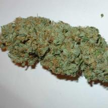 Best Seller - Big Bud