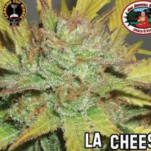 Best Seller - LA Cheese