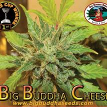 Big Buddha Cheese