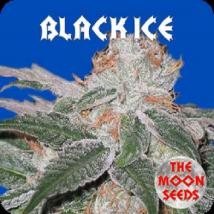 Best Seller - Black Ice