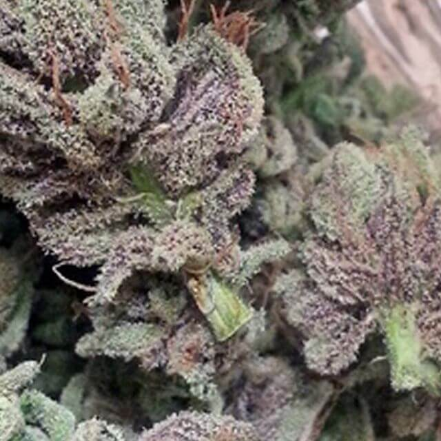 Buy BC Bud Depot Seeds SoCal Masterkush REG