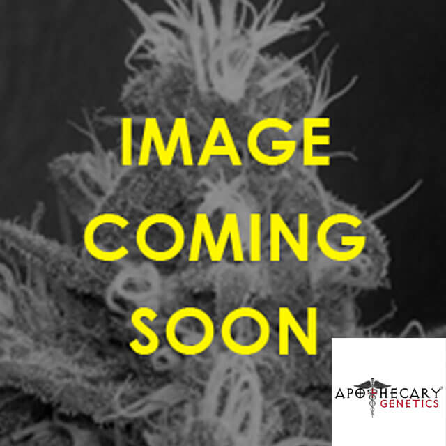 Buy Apothecary Genetics Seeds Cannaberry REG
