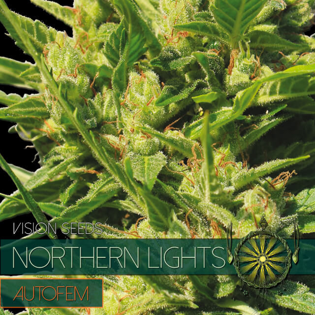 Buy Vision Seeds  Northern Lights Auto FEM