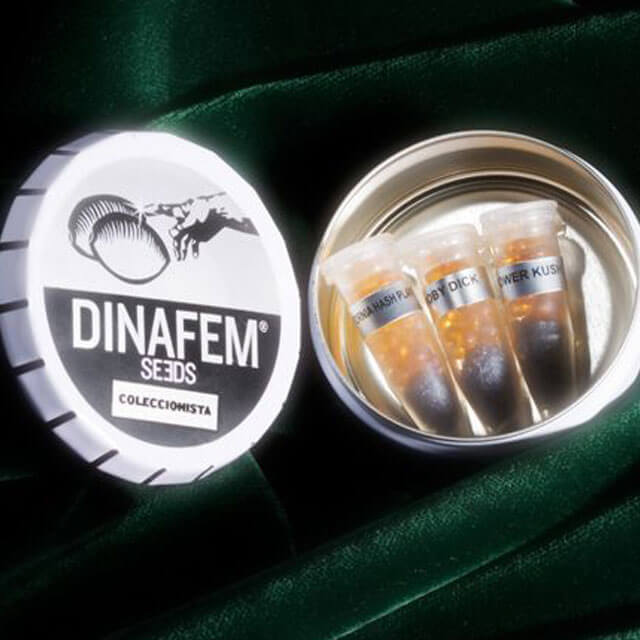 Buy Dinafem Seeds Collection # 2 FEM