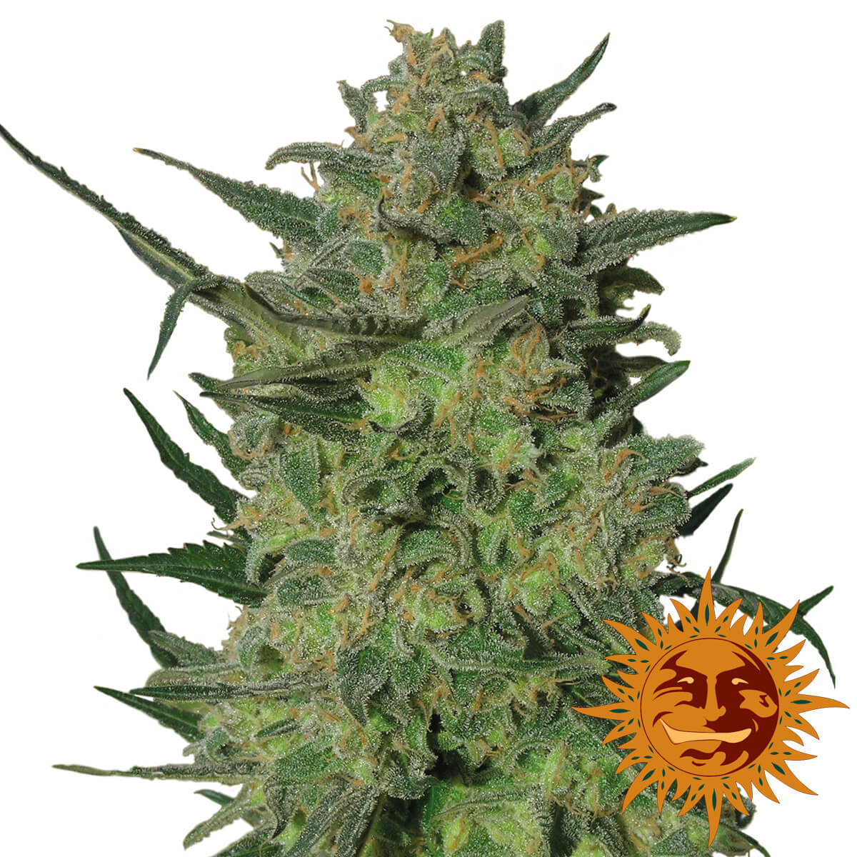 Buy Barneys Farm Seeds LSD FEM
