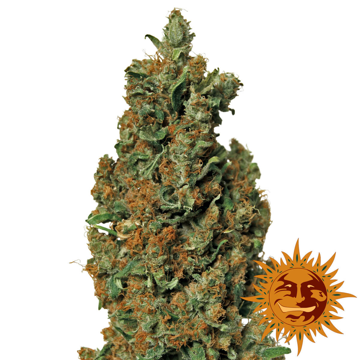 Buy Barneys Farm Seeds Red Diesel FEM